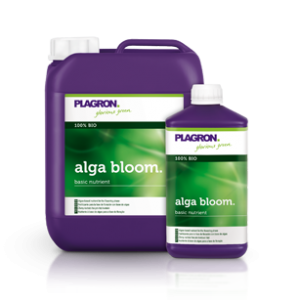 alga-bloom