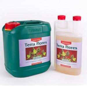 canna-terra-flores